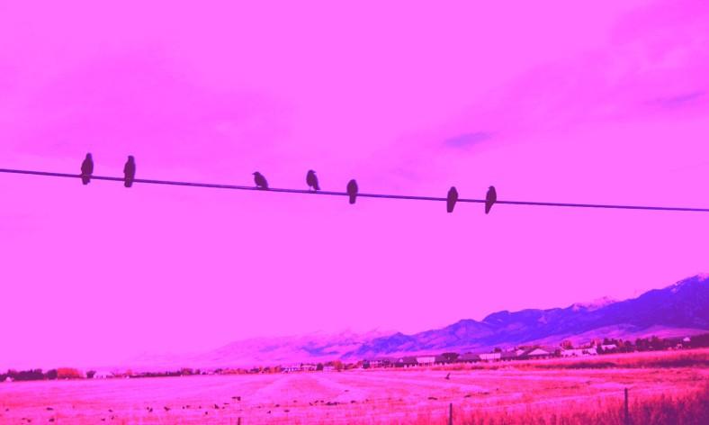 copy ravens